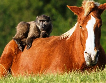 Horseplay team building game